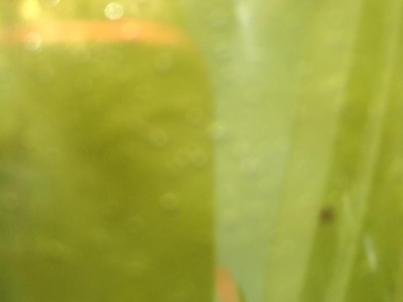 Orange Green Smoothie Healthy Recipe